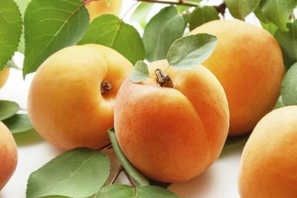 frutas e legumes ajudam emagrecer