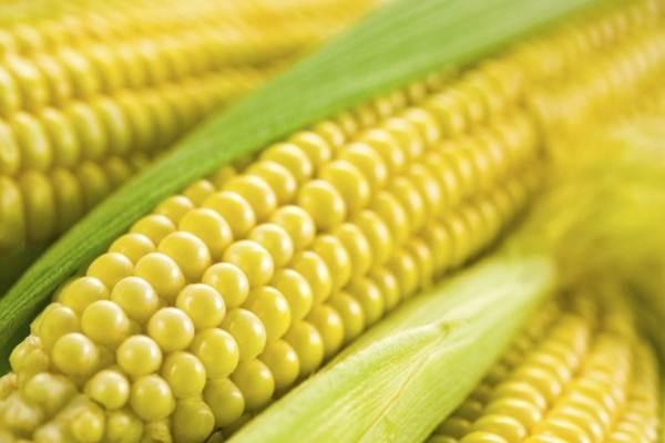 legumes cozidos tem mais fibra