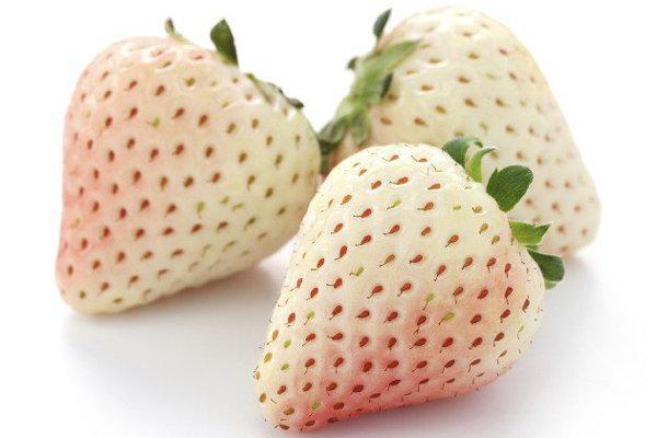 morangos brancos