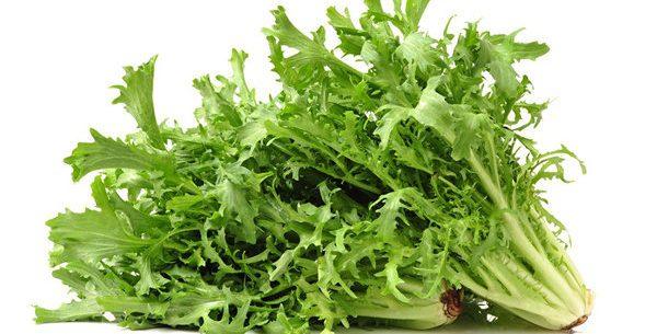 Conheça os benefícios da chicória e aprenda receitas rápidas e práticas com esta verdura